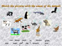 Match the pictures with the names of the animals tiger sheep giraffe shark go...