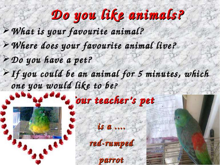 Do you like animals? What is your favourite animal? Where does your favourite...