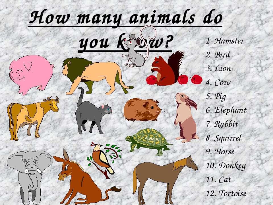 How many animals do you know? 1. Hamster 2. Bird 3. Lion 4. Cow 5. Pig 6. Ele...