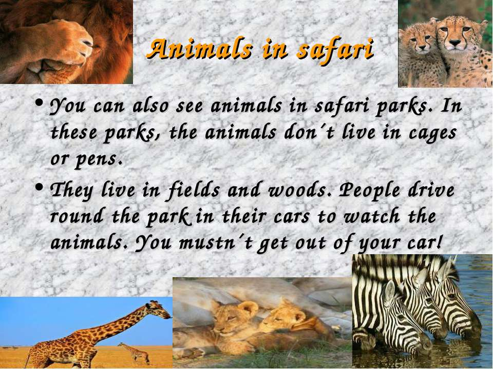 Animals in safari You can also see animals in safari parks. In these parks, t...