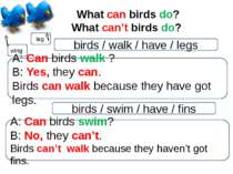 What can birds do? What can't birds do? leg wing birds / walk / have / legs A...
