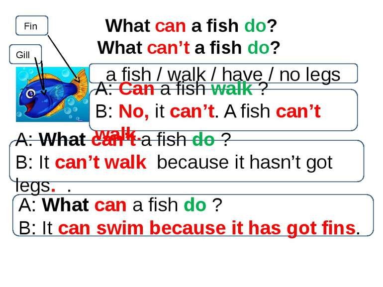 What can a fish do? What can't a fish do? Fin Gill a fish / walk / have / no ...