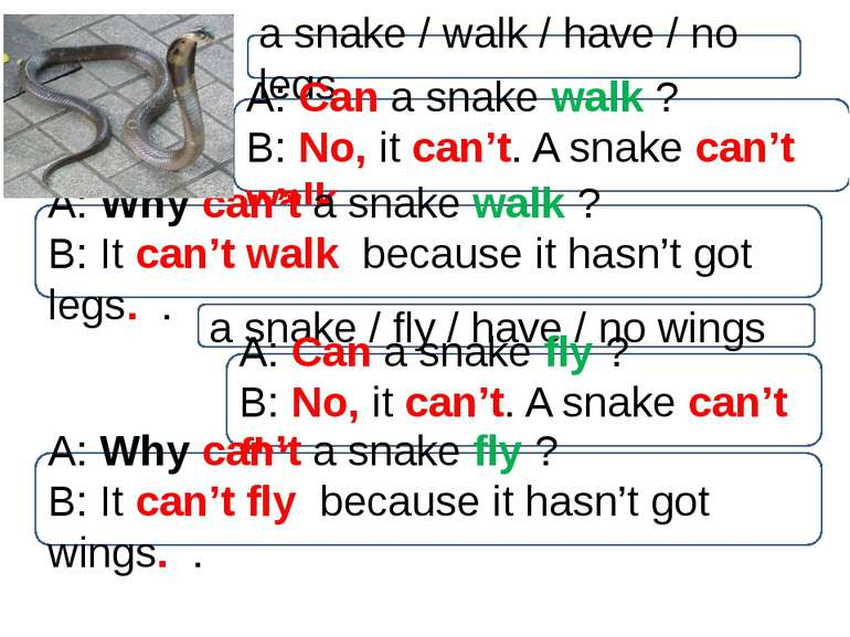 a snake / walk / have / no legs A: Can a snake walk ? B: No, it can't. A snak...
