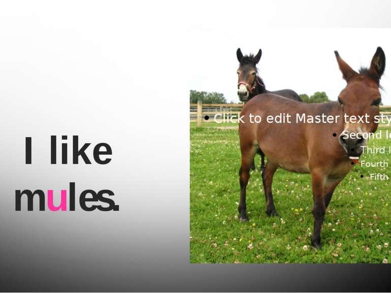 I like mules.
