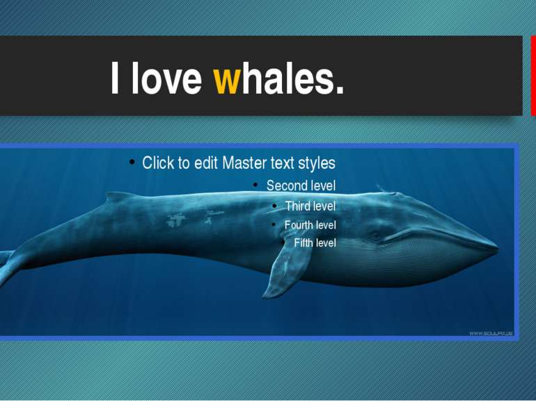 I love whales.