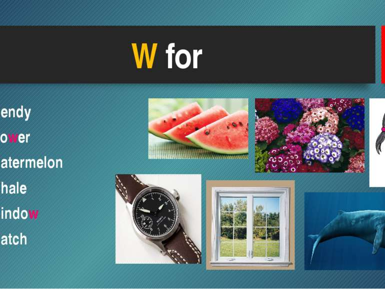 W for Wendy Flower Watermelon Whale Window Watch