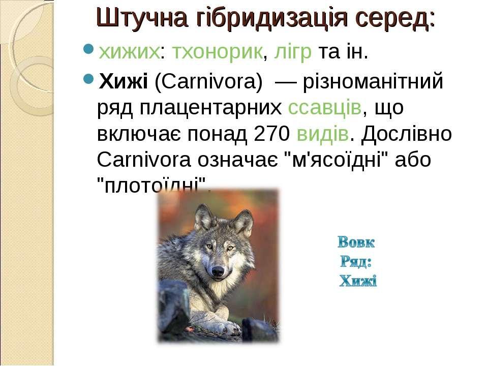 Штучна гібридизація серед: хижих:тхонорик,лігрта ін. Хижі(Carnivora) — р...
