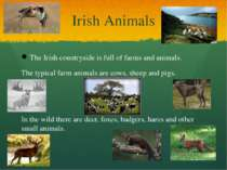 Irish Animals The Irish countryside is full of farms and animals. The typical...