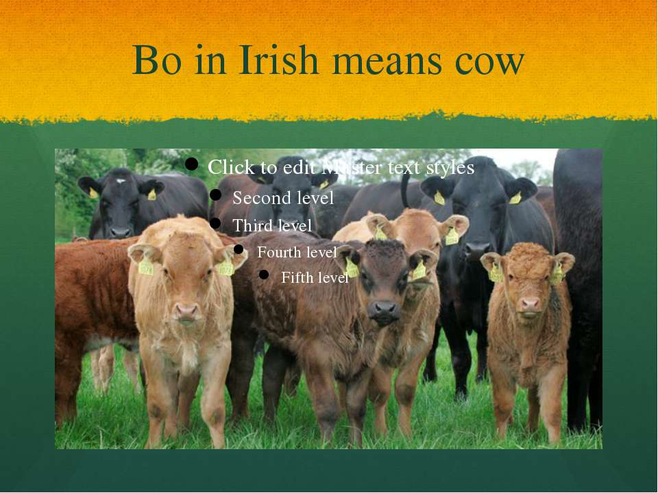 Bo in Irish means cow
