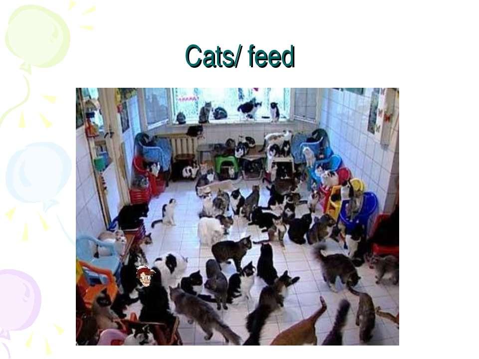 Cats/ feed