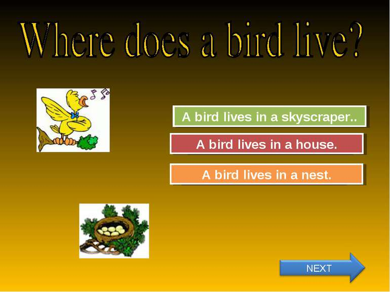 Try Again Great Job! A bird lives in a skyscraper.. A bird lives in a nest. T...