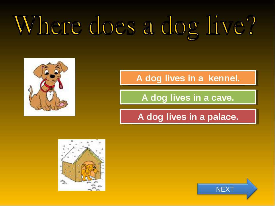 Try Again Great Job! A dog lives in a cave. A dog lives in a kennel. Try Agai...
