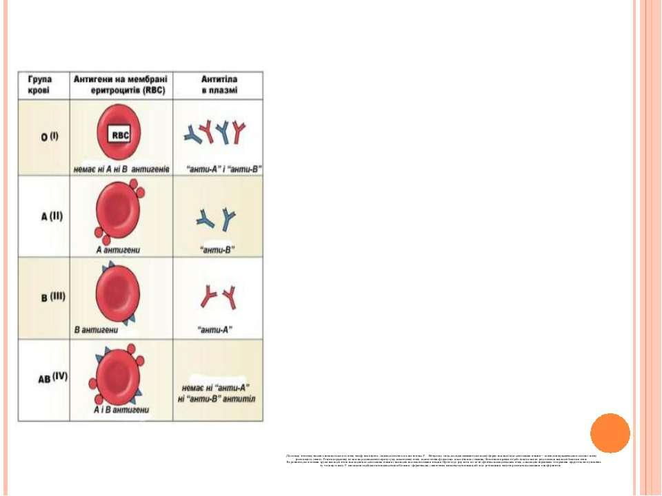 До складу генотипу входить велика кількість генів, які функціонують і взаємод...