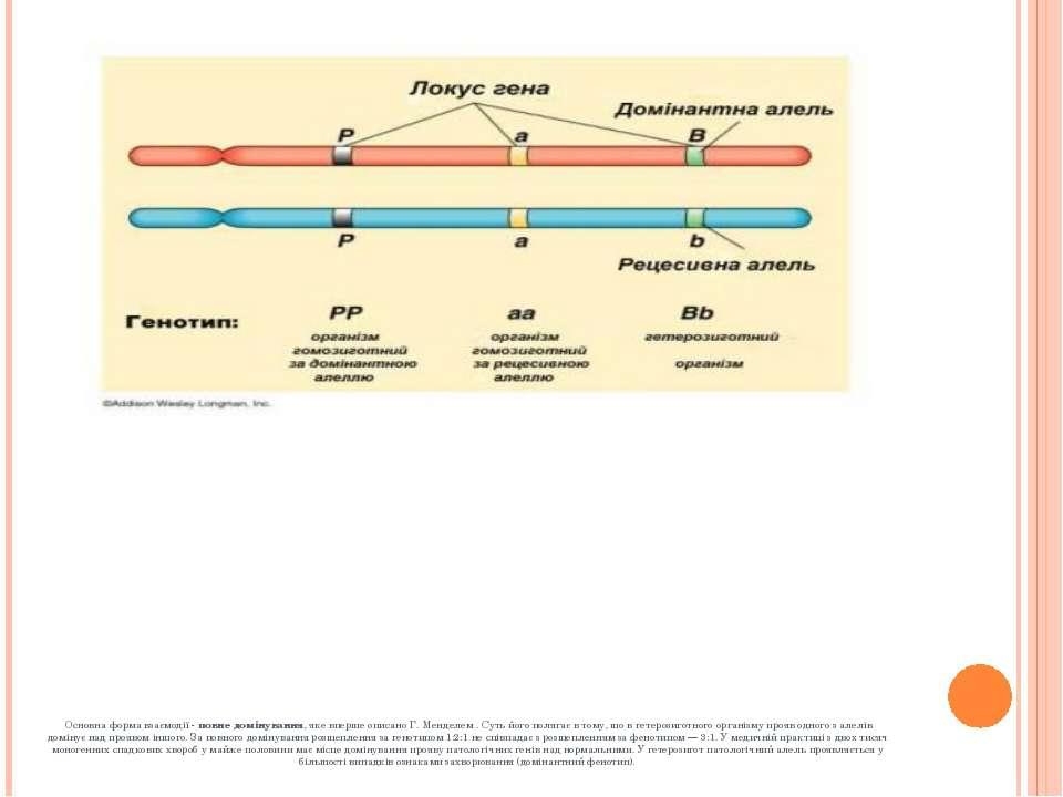 Основна форма взаємодії -повне домінування, яке вперше описано Г. Менделем ...