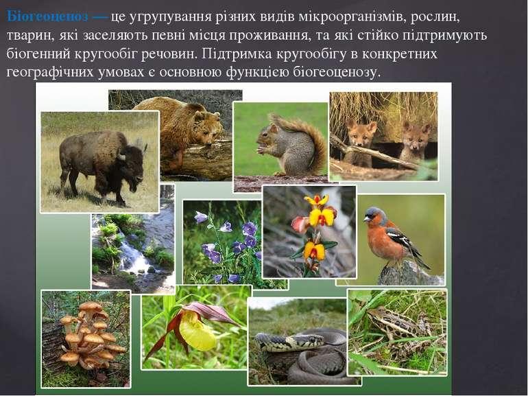 Біогеоценоз — це угрупування різних видів мікроорганізмів, рослин, тварин, як...