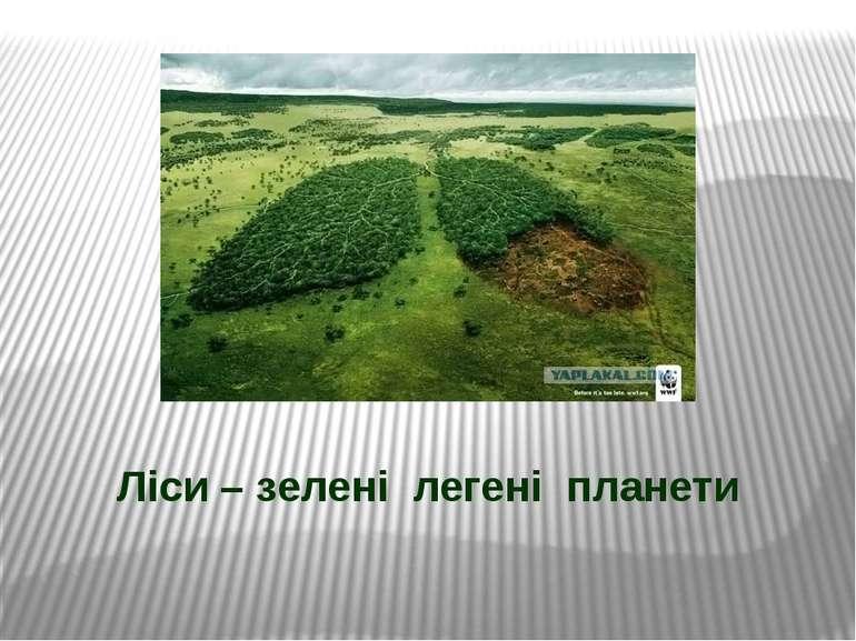 Ліси – зелені легені планети
