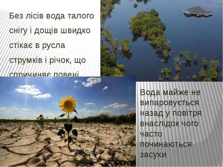 Без лісів вода талого снігу і дощів швидко стікає в русла струмків і річок, щ...