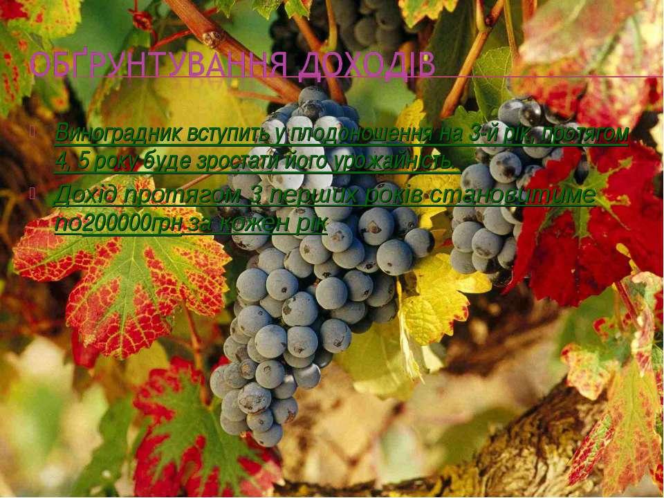 Виноградник вступить у плодоношення на 3-й рік, протягом 4, 5 року буде зрост...