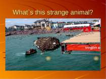 What`s this strange animal?