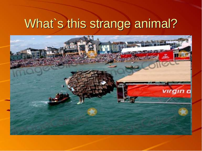 What`s this strange animal?