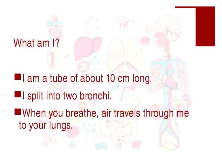 What am I? I am a tube of about 10 cm long. I split into two bronchi. When yo...