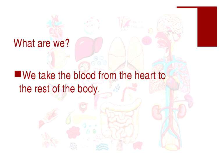 What are we? We take the blood from the heart to the rest of the body.