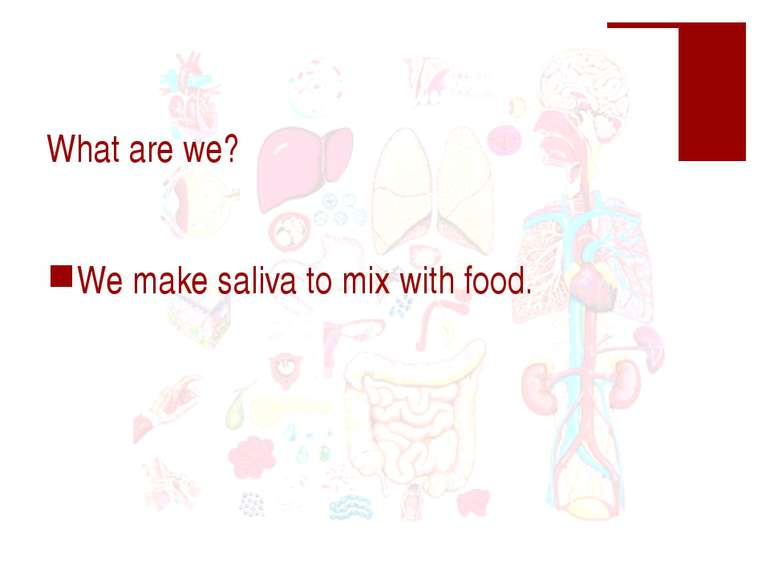 What are we? We make saliva to mix with food.