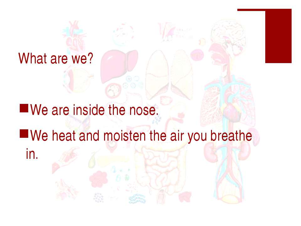What are we? We are inside the nose. We heat and moisten the air you breathe in.