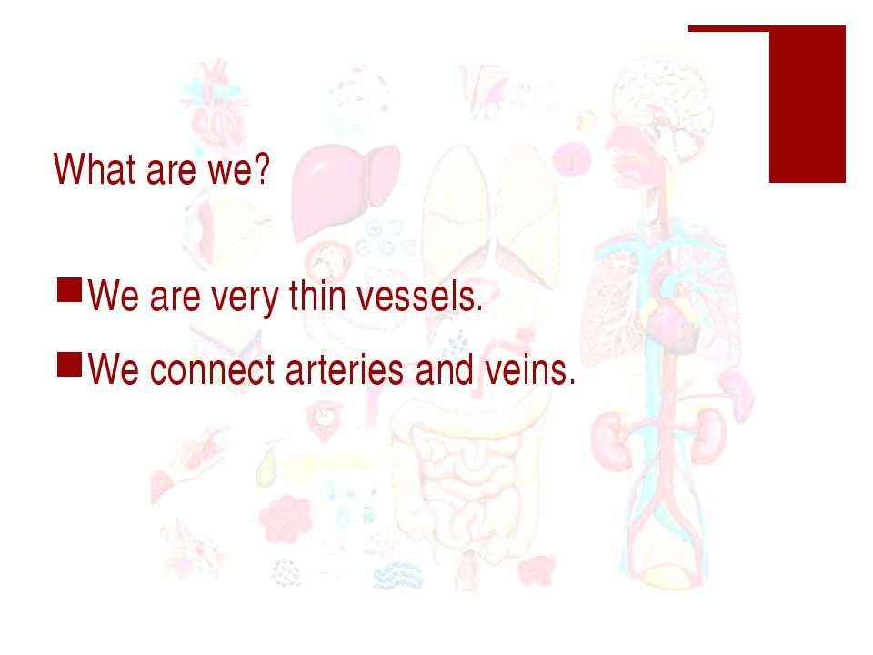 What are we? We are very thin vessels. We connect arteries and veins.