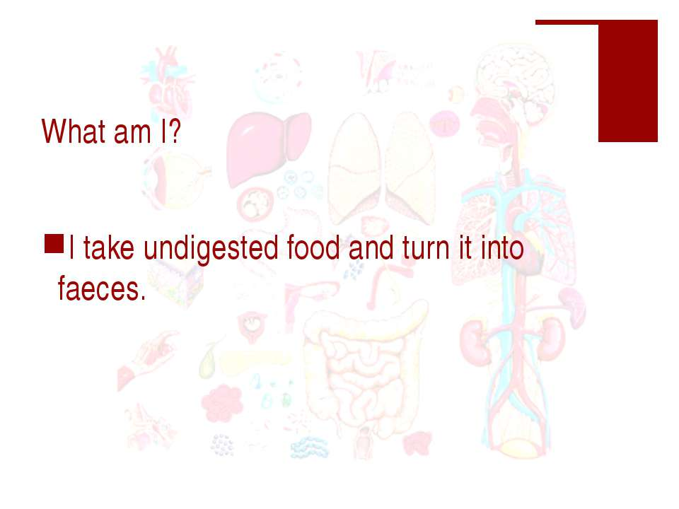 What am I? I take undigested food and turn it into faeces.