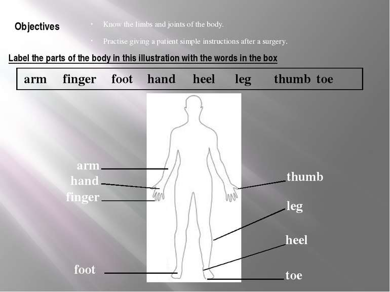 Label the parts of the body in this illustration with the words in the box Kn...