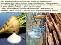 Дуже поширена у природі: синтезується в клітинах усіх зелених рослин і нагром...