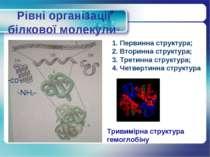 Рівні організації білкової молекули Первинна структура; Вторинна структура; Т...