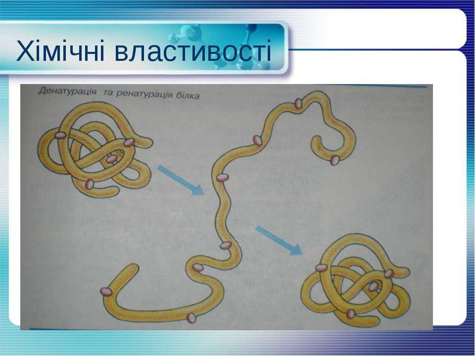 Хімічні властивості Денатурація - Ренатурація