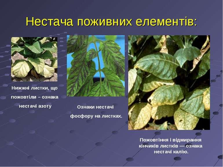 Нестача поживних елементів: Нижжні листки, що пожовтіли – ознака нестачі азот...