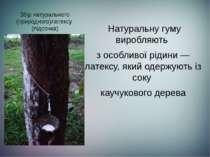 Збір натурального (природного)латексу (підсочка)  Натуральну гуму виробляют...