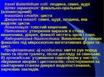 Хазяї Balantidium coli: людина, свині, щурі Шлях зараження: фекально-оральний...