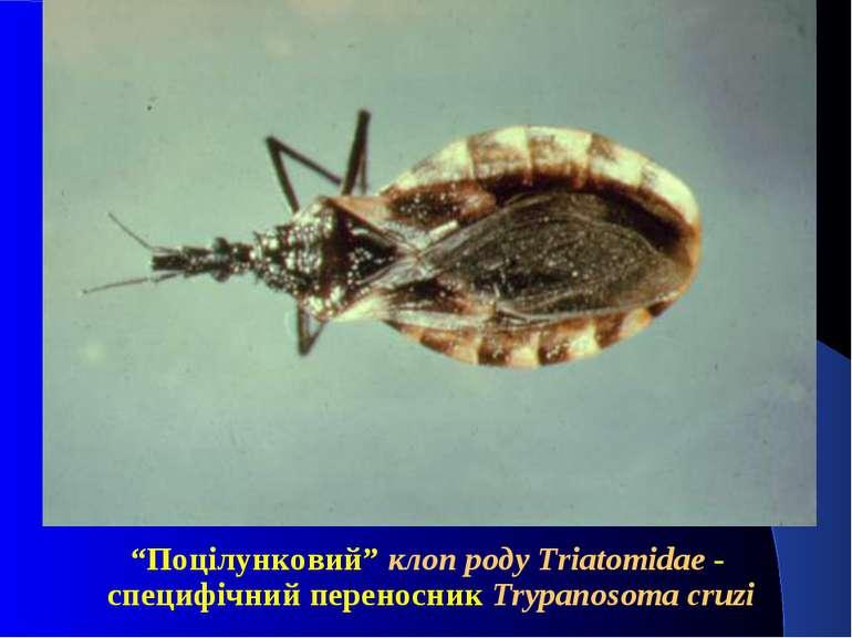"""""""Поцілунковий"""" клоп роду Triatomidae - специфічний переносник Trypanosoma cruzi"""