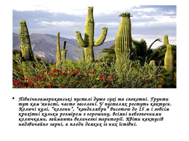 Північноамериканські пустелі дуже сухі та спекотні. Грунти тут кам'янисті, ча...