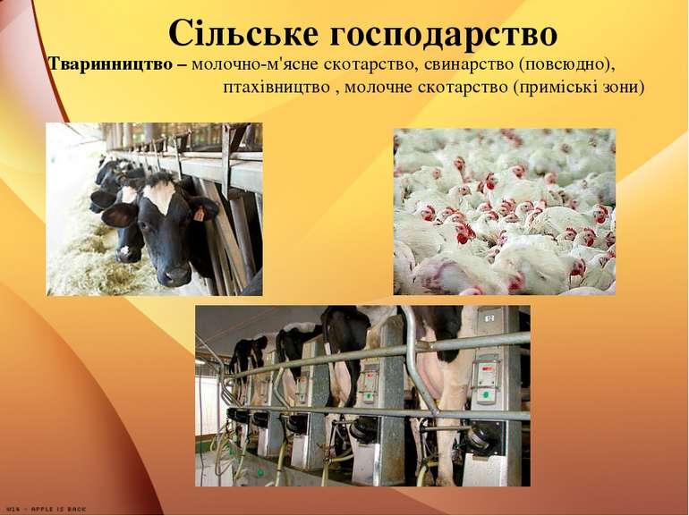 Сільське господарство Тваринництво – молочно-м'ясне скотарство, свинарство (п...