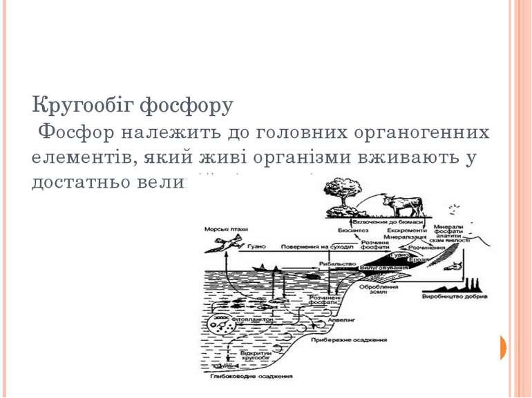 Кругообіг фосфору Фосфор належить до головних органогенних елементів, який жи...