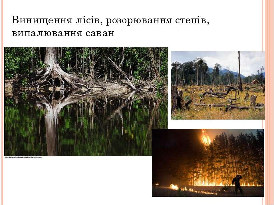 Винищення лісів, розорювання степів, випалювання саван