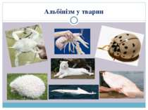 Альбінізм у тварин