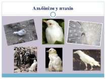 Альбінізм у птахів