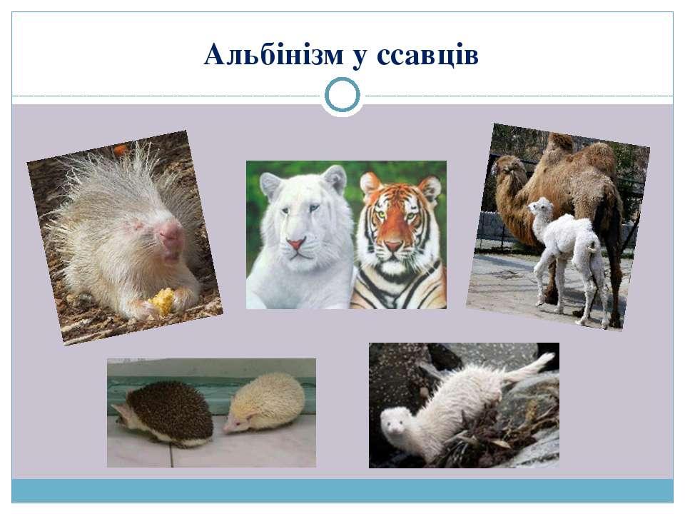 Альбінізм у ссавців