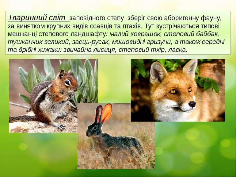 Тваринний світ заповідного степу зберіг свою аборигенну фауну, за винятком кр...