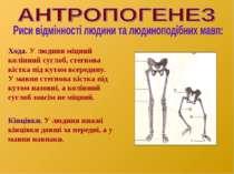Хода. У людини міцний колінний суглоб, стегнова кістка під кутом всередину. У...