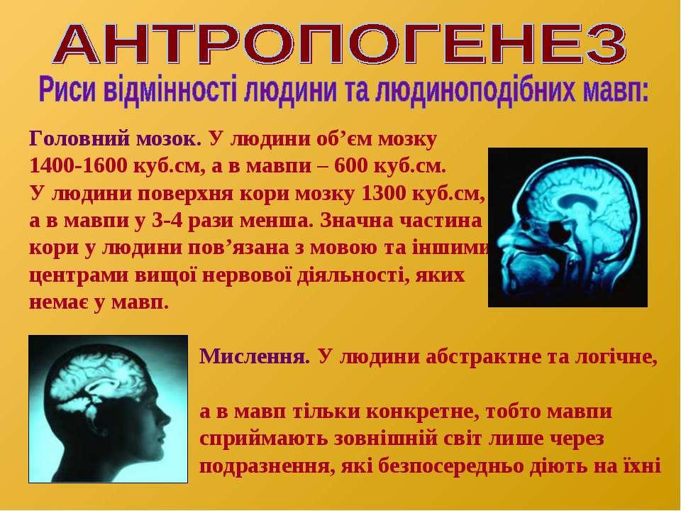 Головний мозок. У людини об'єм мозку 1400-1600 куб.см, а в мавпи – 600 куб.см...