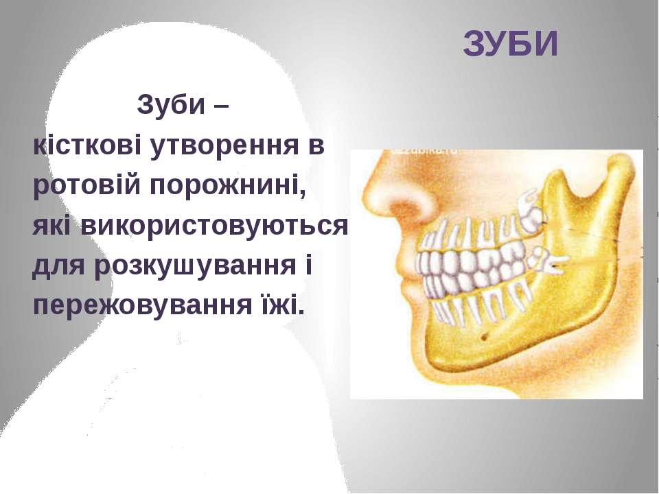 Зуби – кісткові утворення в ротовій порожнині, які використовуються для розку...