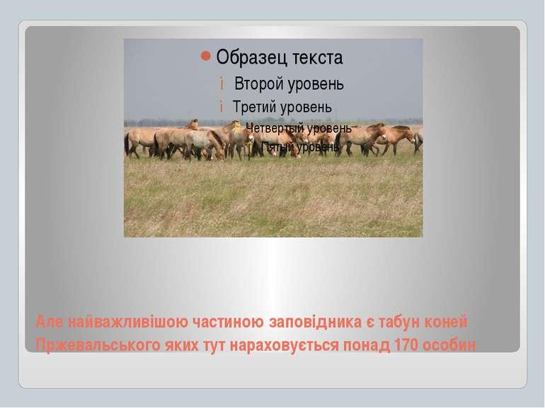 Але найважливішою частиною заповідника є табун коней Пржевальського яких тут ...